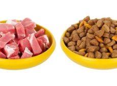 Кормить эрдельтерьера можно как сухим, так и натуральным кормами