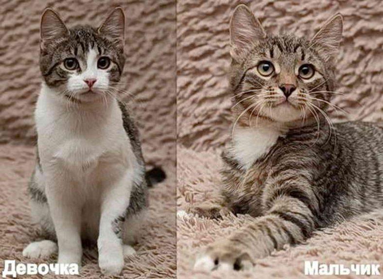 Внешние отличия котов и кошек