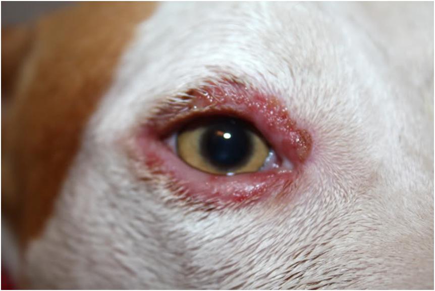 Воспаление век возникает на фоне аллергических реакций, травм, инфекции