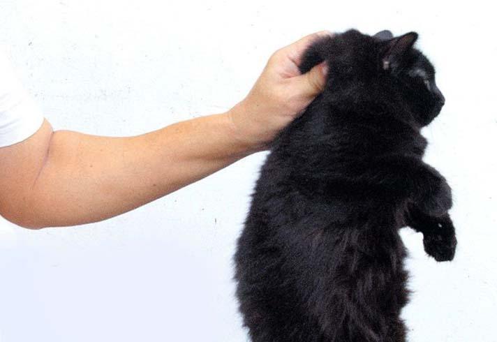 """Воспитание кота не должно базироваться на одной ароматической """"терапии"""""""