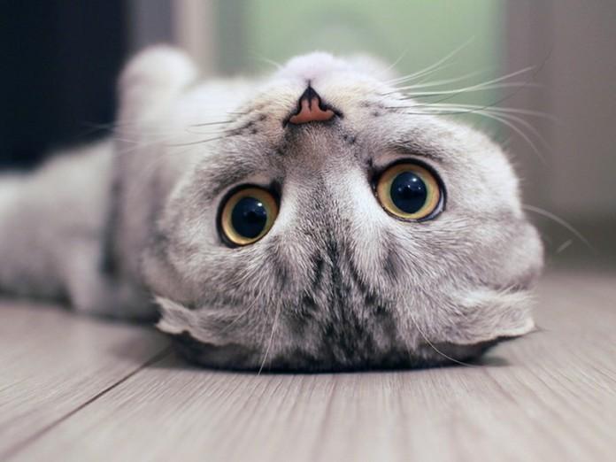 Воспитание резкими запахами подходит далеко не всем котам