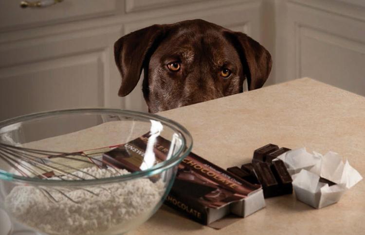 Во избежание рецидивов экземы необходимо тщательно следить за рационом собаки