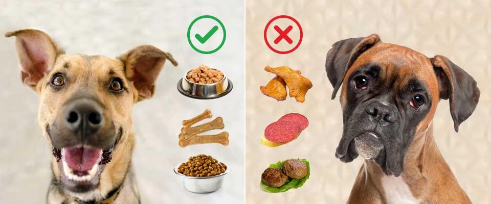 Вредная и полезная еда для собаки