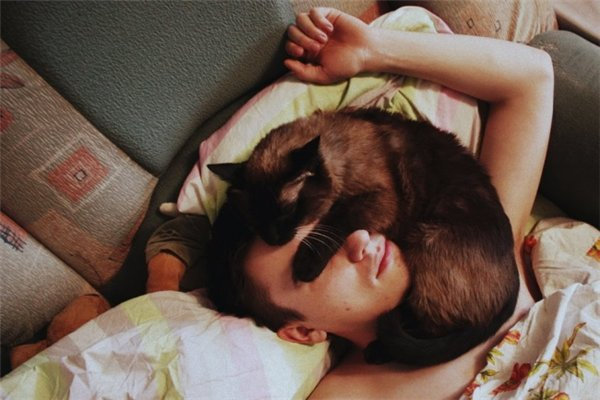 Вседозволенность кота, не познавшего иерархию в доме, не знает границ