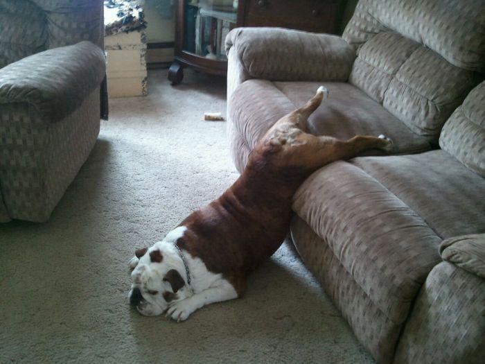 Выберите момент, когда собака максимально расслаблена и дружелюбно настроена