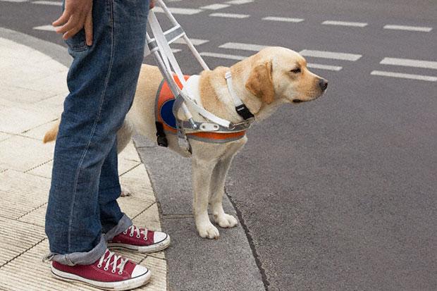 В большинстве случае собаки поводыри бесплатно сопровождают своих хозяев