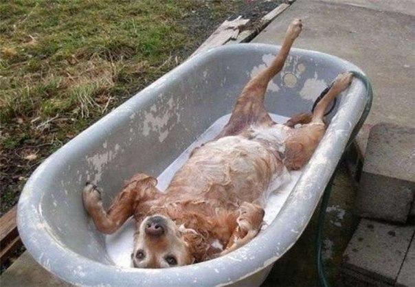 В вопросах гигиены важно знать меру - слишком частое мытье раздражает и высушивает кожу