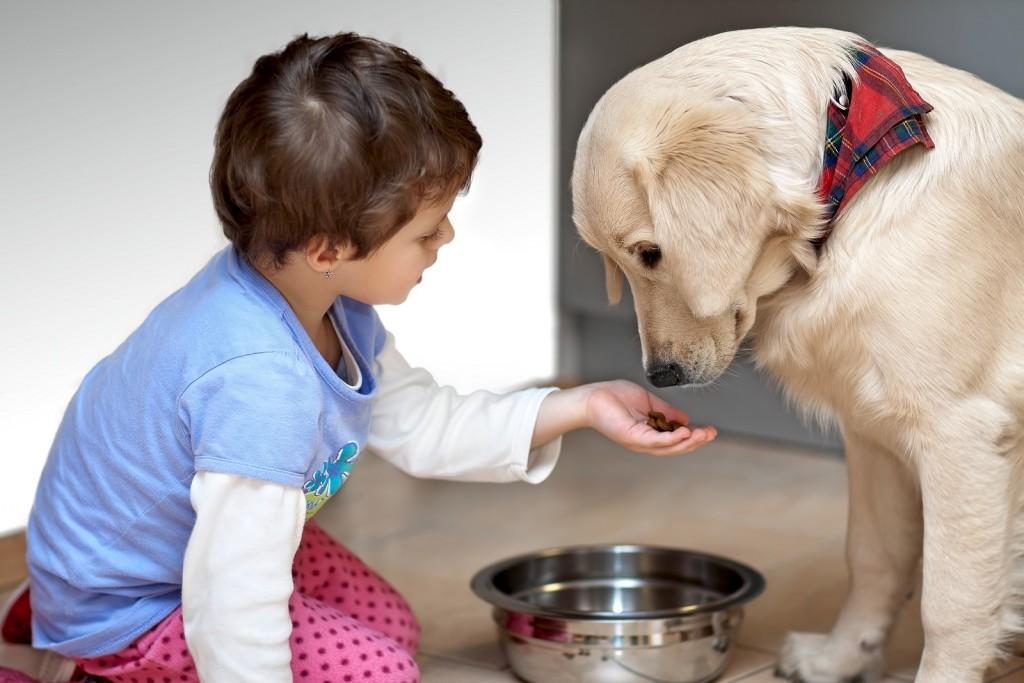 В воспитании неагрессивной собаки активное участие могут принимать дети
