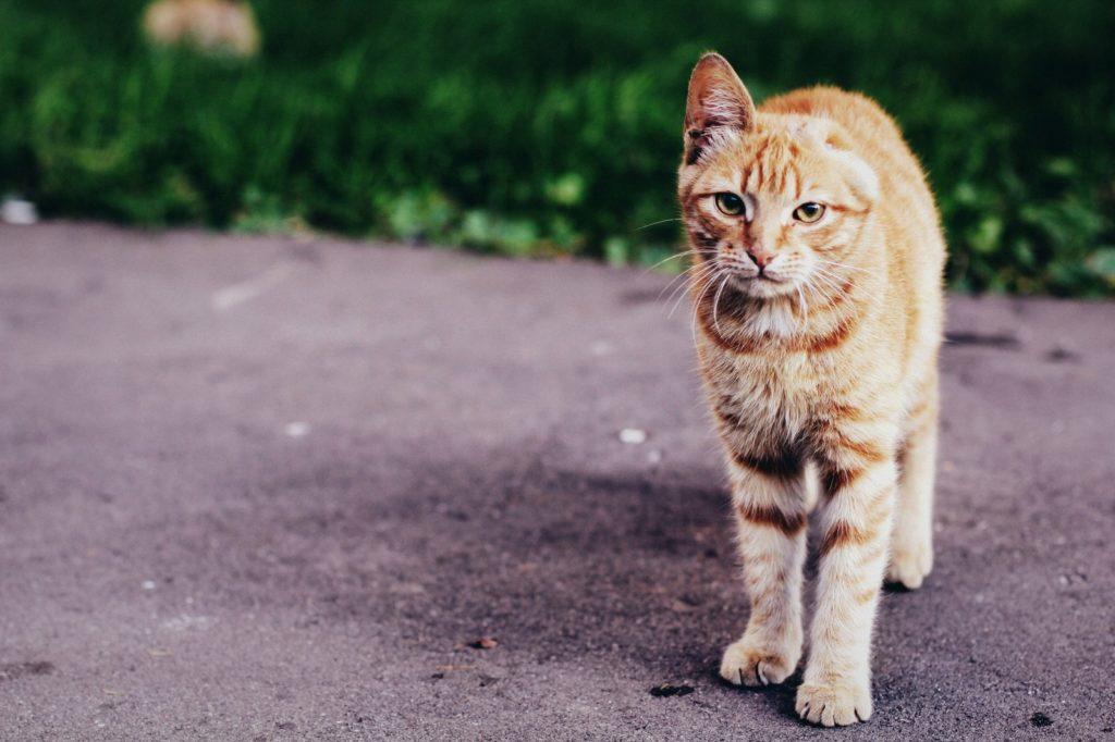 В домашних условиях ранее бездомные коты не сразу привыкают к изобилию пищи