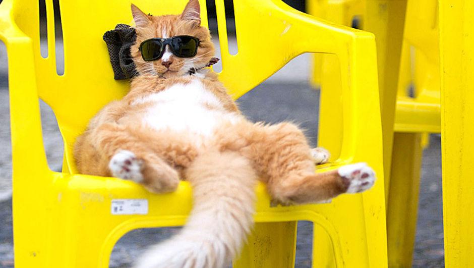В жаркое время года коты используют хвост в качестве своеобразного опахала