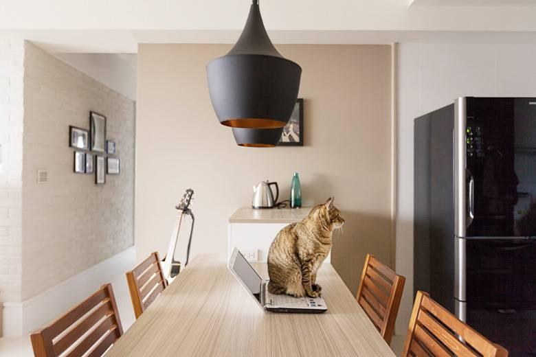 В идеально стерильной квартире коту будет очень сложно найти себе место