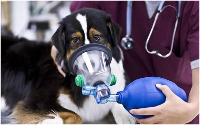 В клинике организм собаки обеспечат кислородом