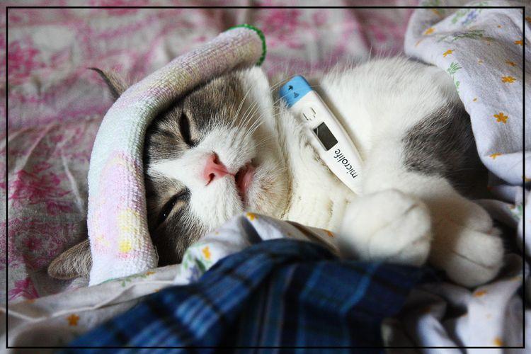 В крайнем случае температуру можно измерить под мышкой