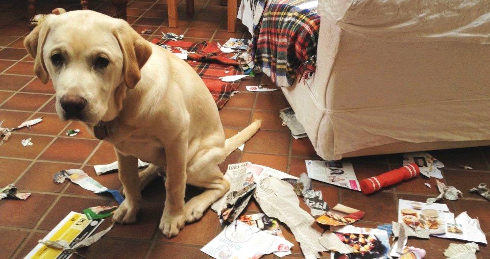 В организме собаки может не хватать кальция, фосфора и других важных веществ в организме