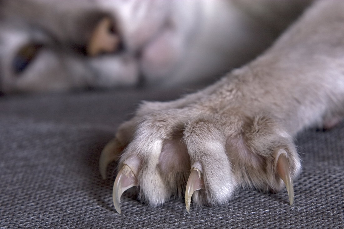 В отличии от людей, коты не располагают маникюрными наборами и ищут иные способы сточить когти