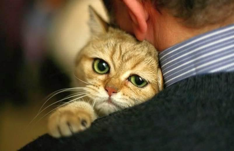 В первые дни необходимо внимательно следить за котом