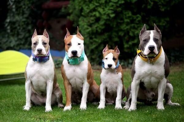 В разном возрасте собаки нуждаются в различных пищевых добавках