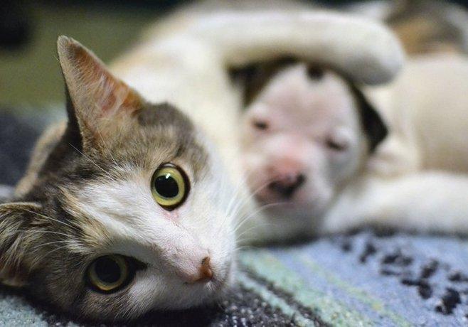 В редких случаях кошки способны усыновлять щенят и выкармливать их наряду со своими котятами