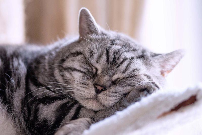 В режимах сна и бодрствования кота хозяин всегда принимает важное участие