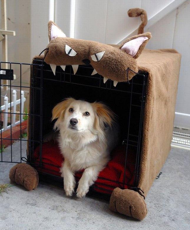 В своем домике нуждаются не только кошки, но и собаки