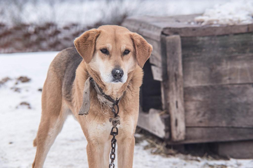 В сельской местности у собаки гораздо больше собеседников, чем в городской квартире