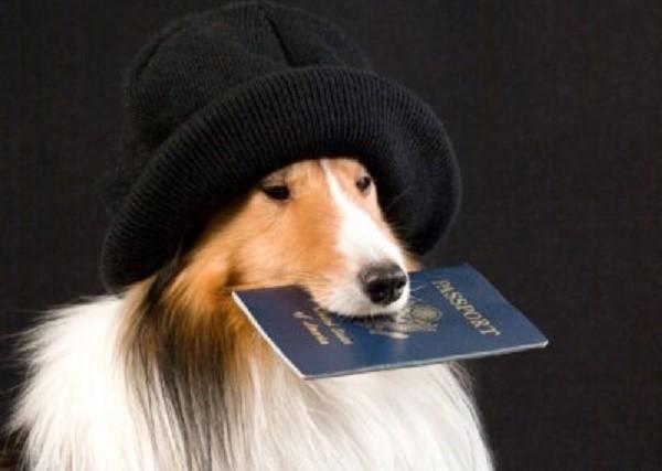 В составляемом договоре необходимо указать также и данные о собаках-участниках вязки