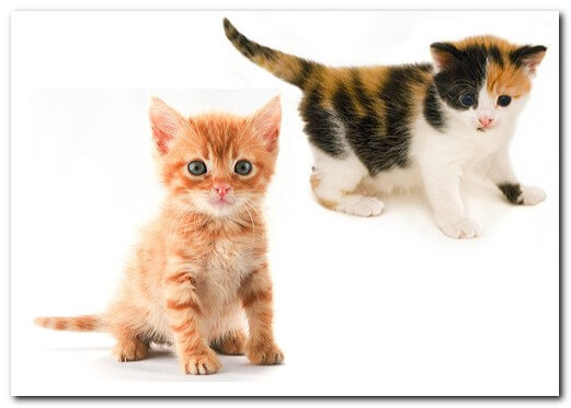 Кто здесь кот , а кто кошка