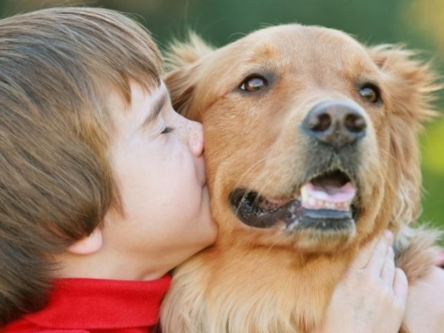 Гипоаллергенные собаки вызывают аллергию реже прочих собак, но не дают гарантии отсутствия симптомов
