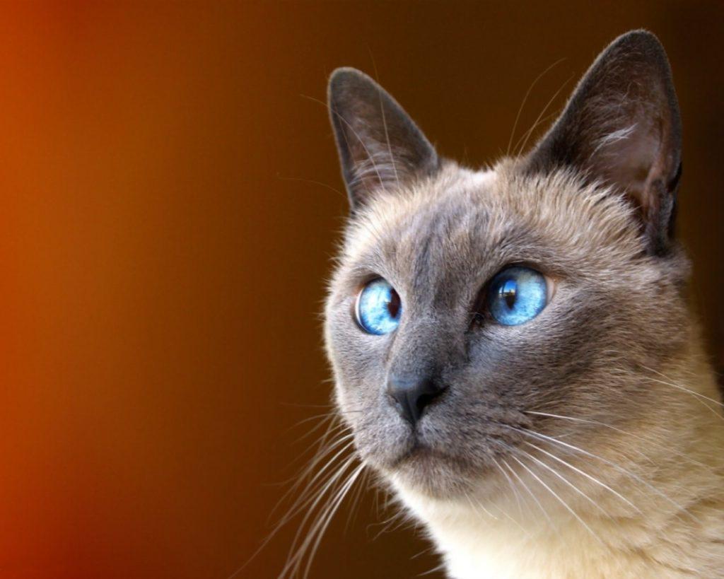 С профилактической чисткой глаз питомца может справиться и сам хозяин