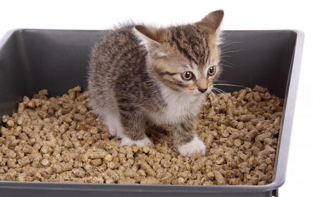 Гранулы часто становятся предметом интереса котов, особенно юных