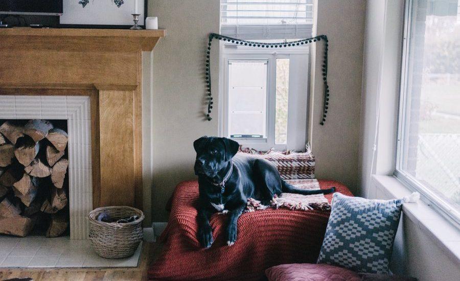 Даже если ваша собака является заядлым домоседом, она подвержена различным вирусам