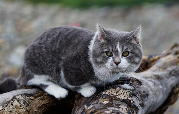 Далеко не всем котам требуется увеличение рациона