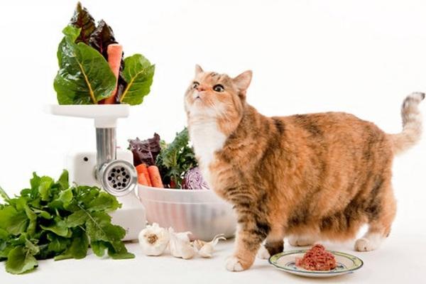 Далеко не все овощи хорошо перевариваются организмом кота