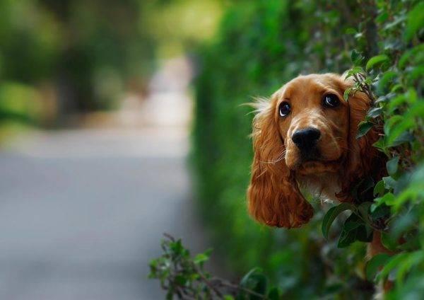 Далеко не для всех собак прогулка является долгожданным праздником
