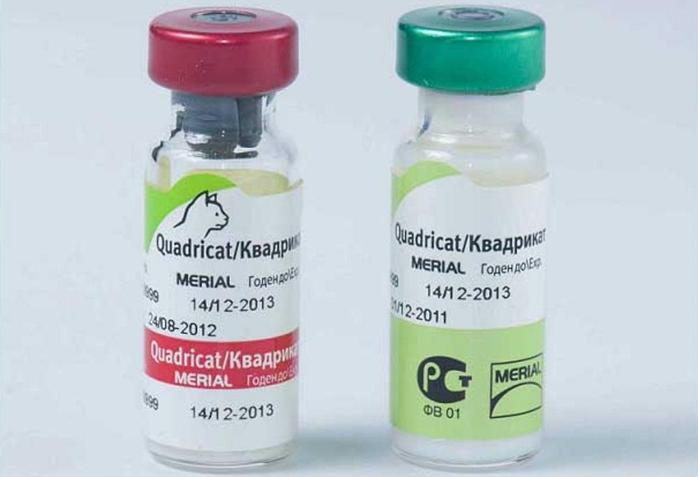 Препараты хранятся в ампулах и вводятся котам внутривенно