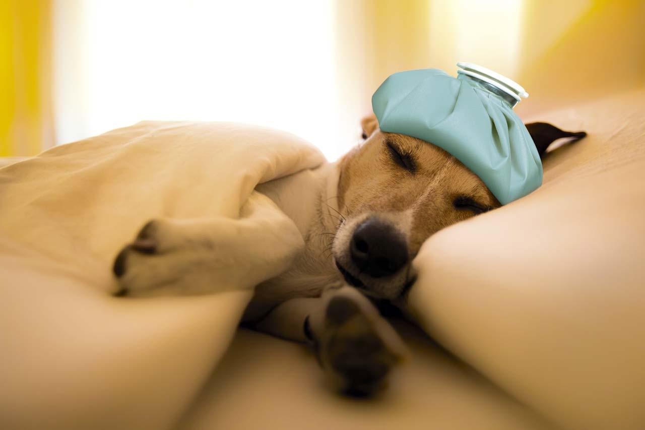Движения во время сна могут указывать на проблемы со здоровьем
