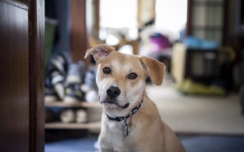 Дворняга - собака без претензий