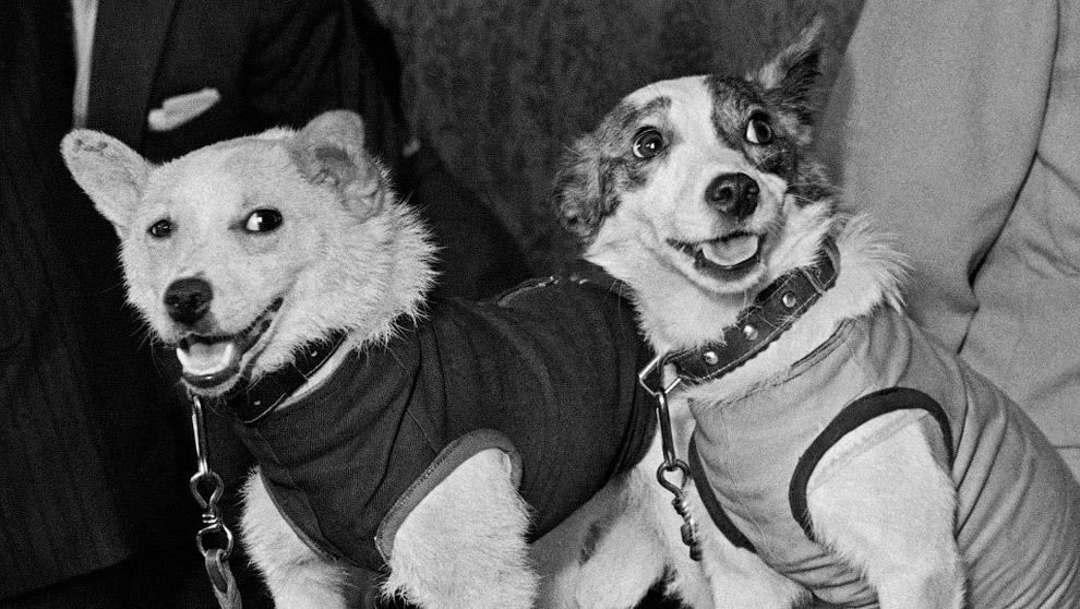 Дворняги Белка и Стрелка - первые советские космонавты