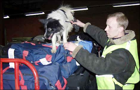 Дворняжка - розыскная собака