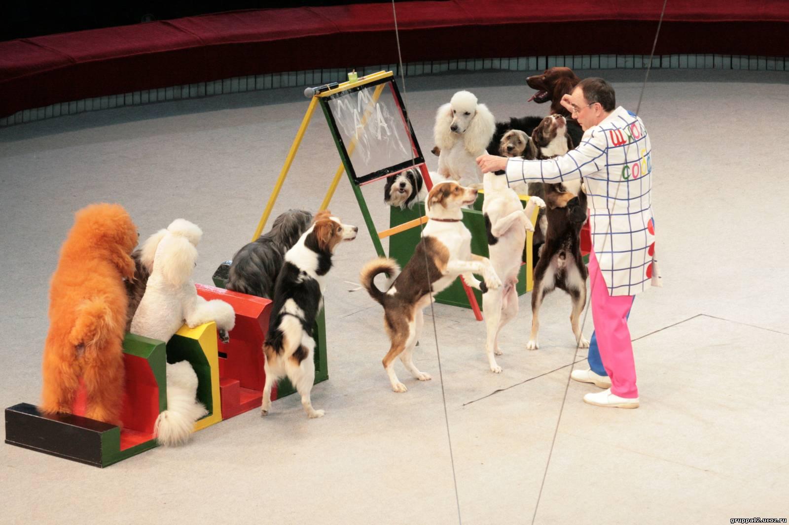 Дворняжки успешно выступают в цирковых представлениях наряду с породистыми собаками
