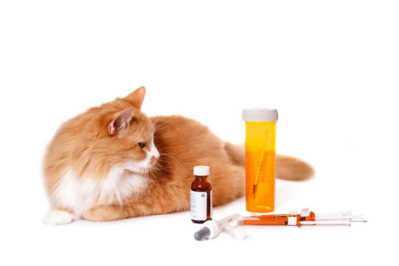 Диабет - одно из наиболее опасных последствий перекармливания кота