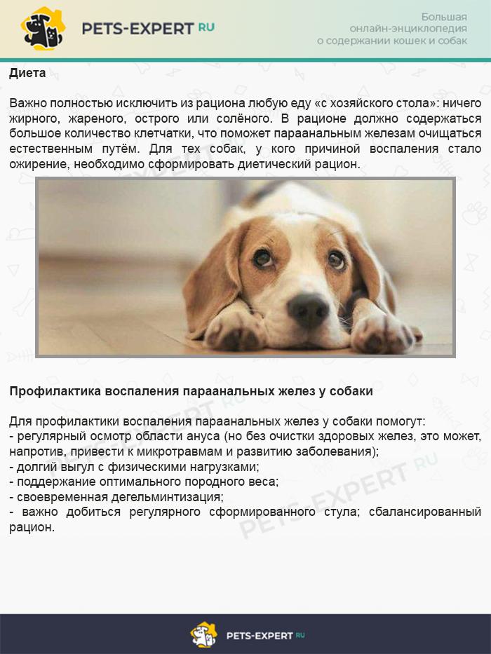 Диета и профилактика воспаления параанальных желез у собаки