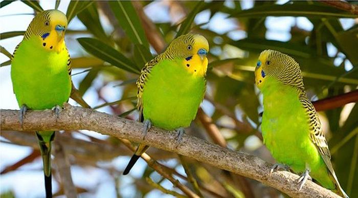 Для ЕКШ домашние птицы — не друзья, а объект для охоты