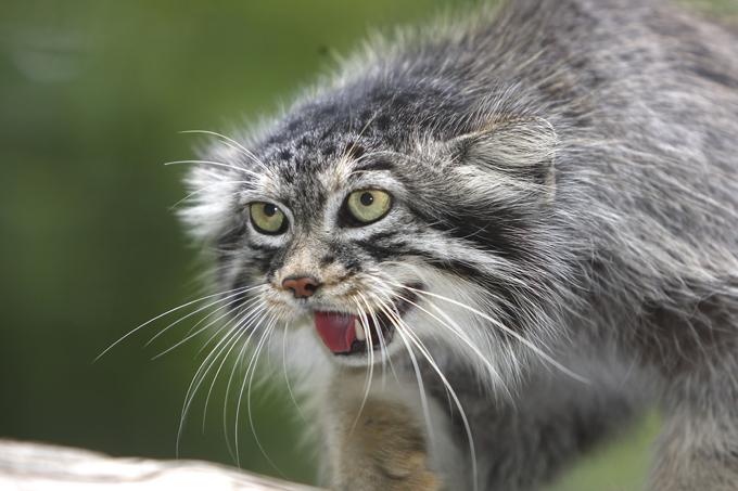Для диких собратьев домашних котов ночная охота является способом выживания