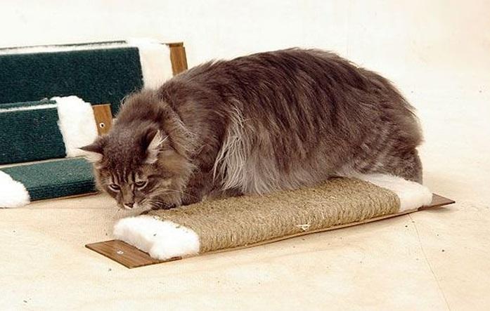 Для некоторых котов назначение когтеточки так и остается загадкой