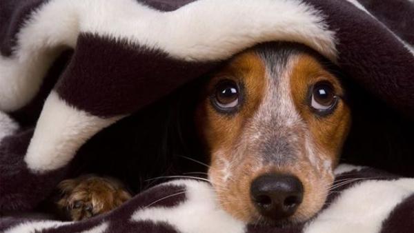 Для некоторых собак выход из дома уже сопряжен с сильным стрессом