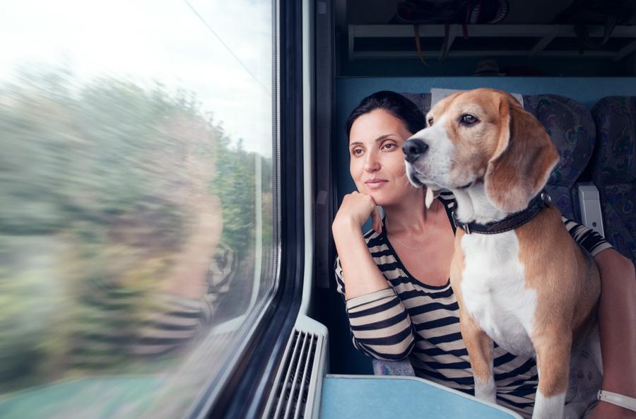 Для поездки в Финляндию хозяину понадобится оформить два варианта ветпаспорта для собаки