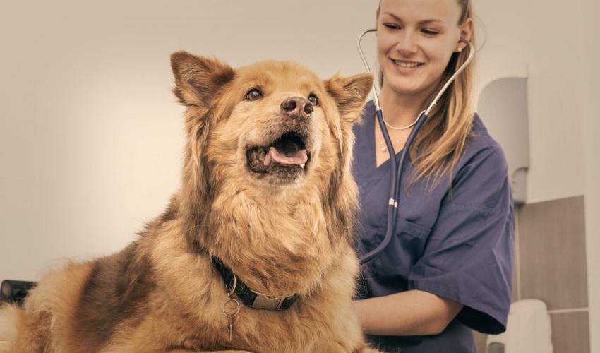 Для постановки точного диагноза и оказания необходимой помощи обратитесь к ветеринару