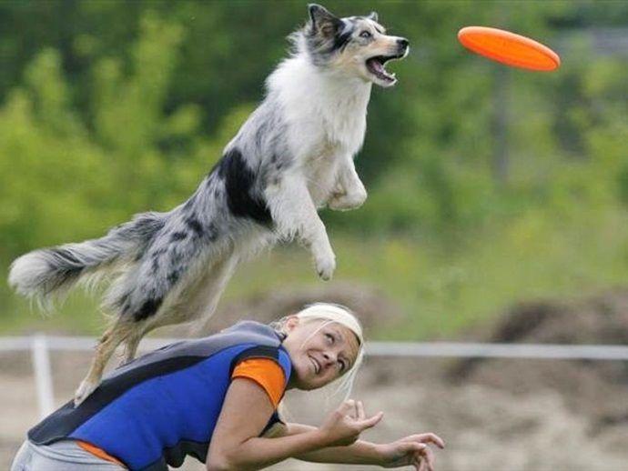 Для похудения собаке необходимо обеспечить достаточный уровень физических нагрузок