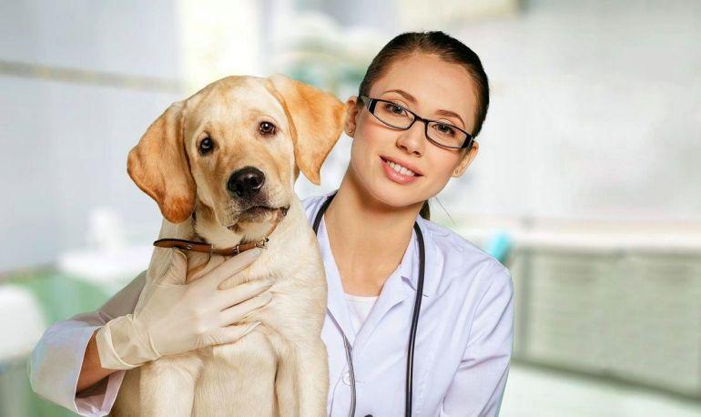 Для установления точной причины обратитесь к ветеринару